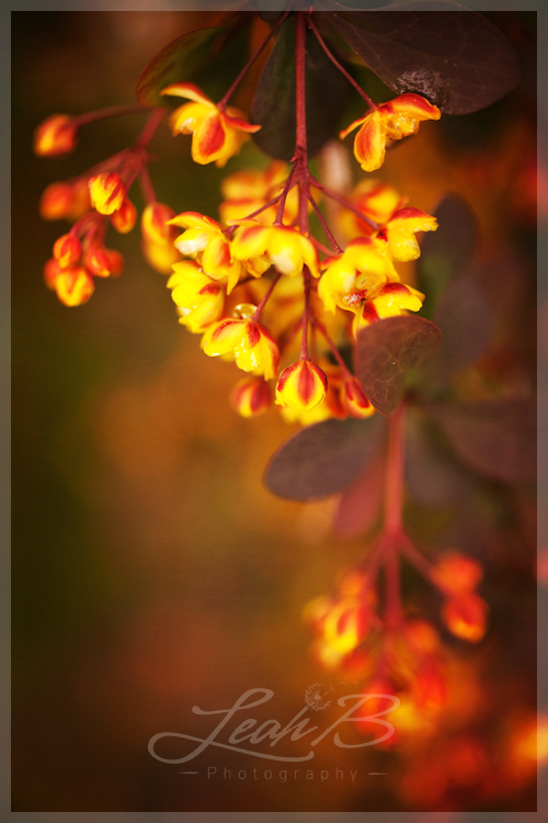 yellow and red bush