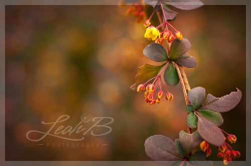 yellow and red bush3
